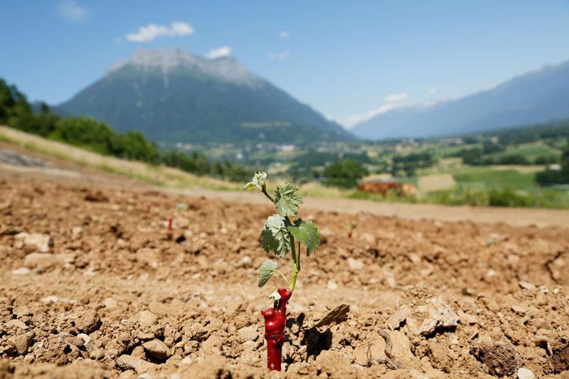 Plantation-plant.jpg