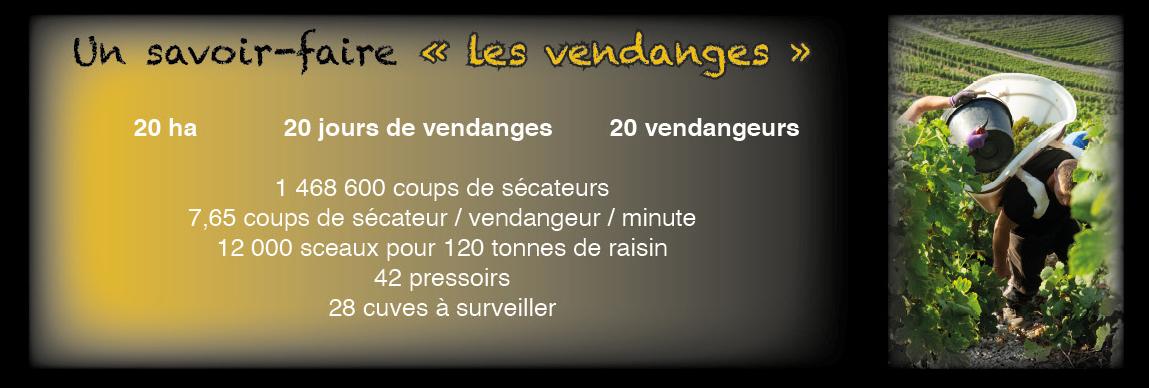 Bannière-Vendanges.jpg