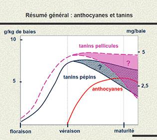 opt-mat-tanins-3.jpg