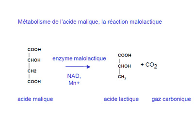 reaction-FML.jpg