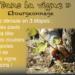 Ebourgeonnage